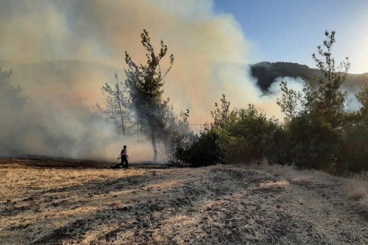 Balıkesir Sındırgı'da orman yangını