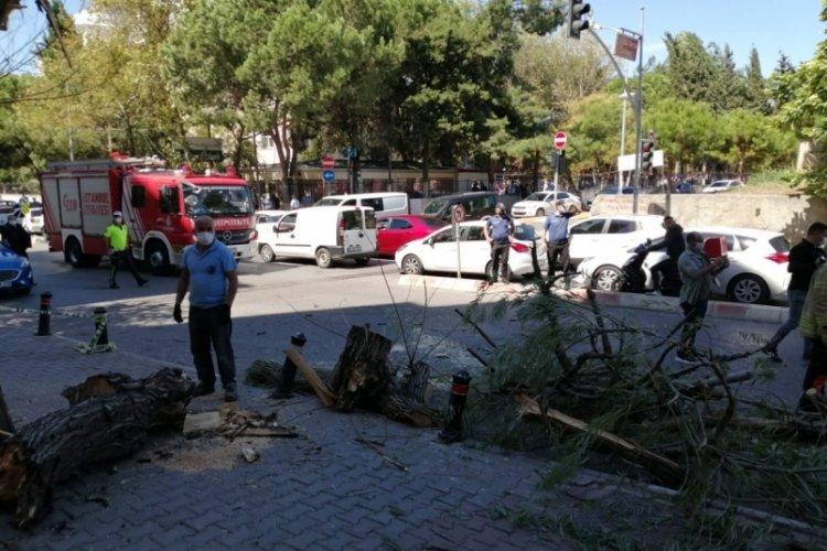 İstanbul'da rüzgarın etkisiyle devrilen ağacın altında kalmaktan son anda kurtuldu