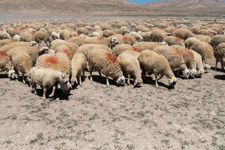 Bilecik'te arazide koyunlarını otlatan kişi ölü bulundu
