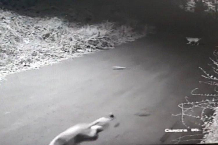 İstanbul Sarıyer'de köpekler kovalarken düşen çocuğun kolu kırıldı