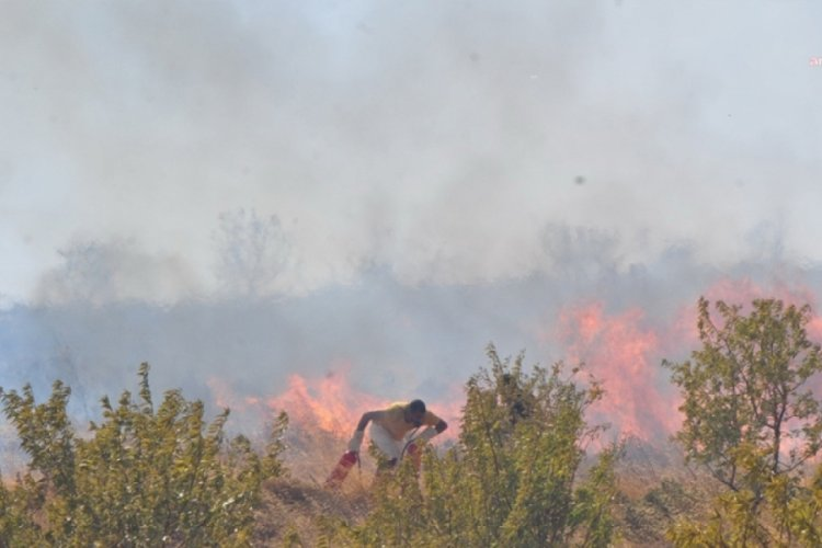 İzmir Kemalpaşa'da orman yangını