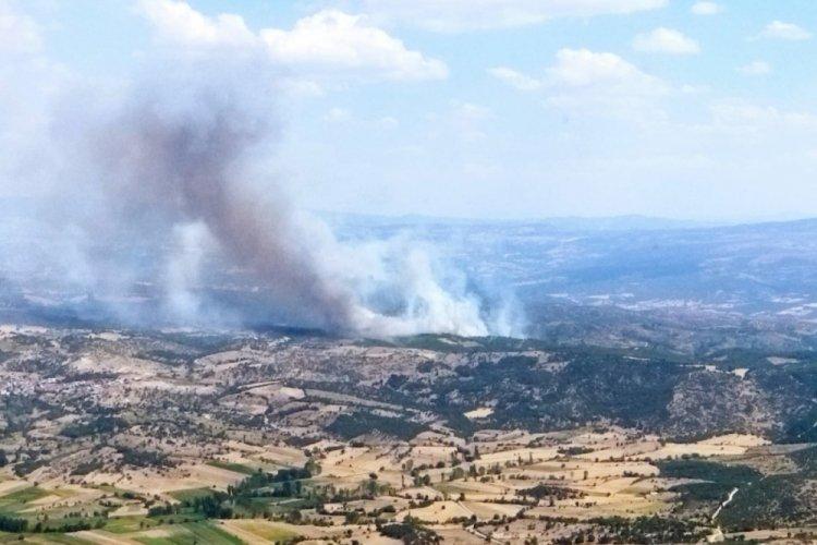 Manisa'da ormanlık alanda yangın çıktı!