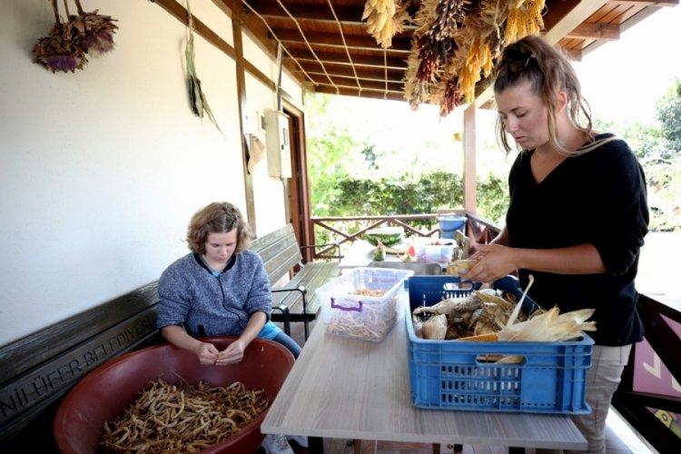 Bursa Nilüfer kent bostanlarında tohum alma zamanı