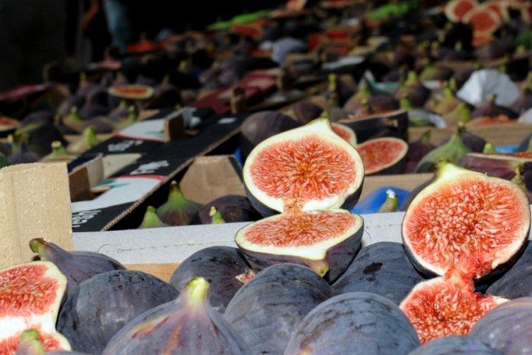 Bursa siyah inciri görücüye çıkıyor