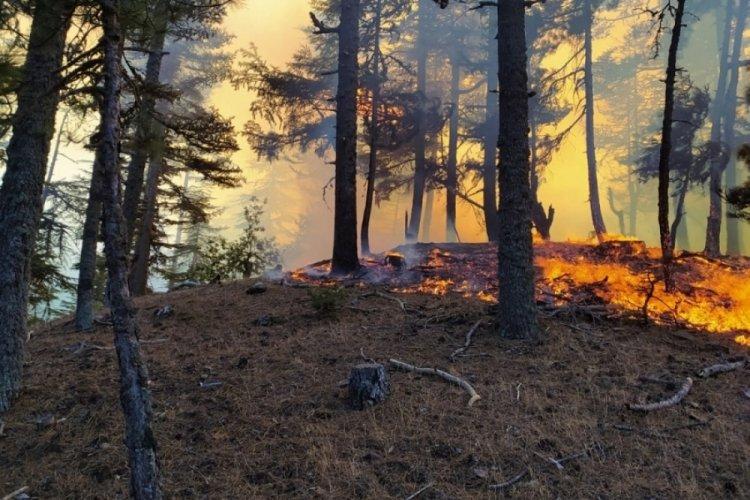 Adana'da ağaçlık alanda yangın! Havadan ve karadan müdahale ediliyor