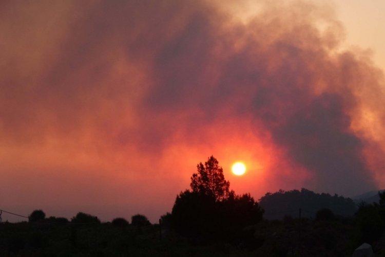 Mersin Anamur yangınında 30 hektar kızılçam ormanı zarar gördü
