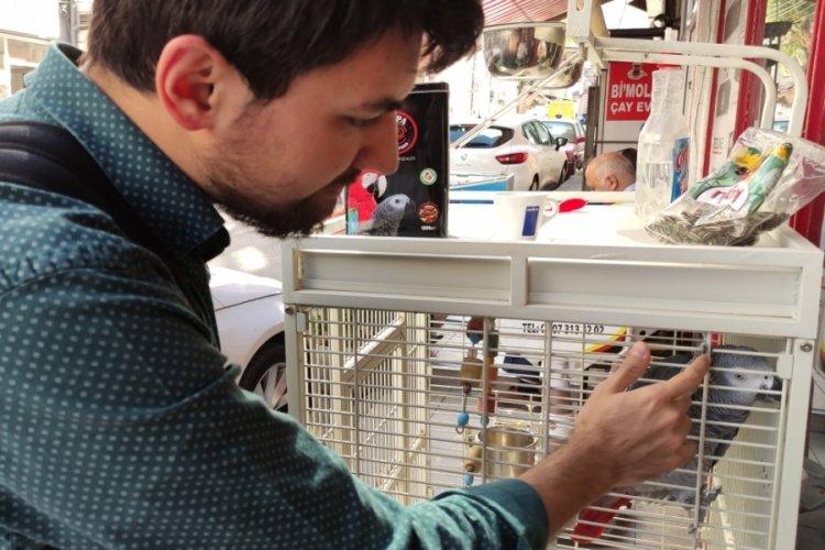 Bursa'da şakacı papağanı tanımayan yok! Dolmuşlara ıslık öttürüp durduruyor