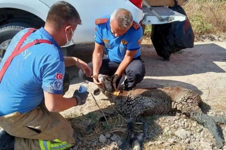 Bursa'da çukura düşen keçi, ekipler tarafından kurtarıldı