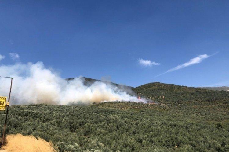 Bursa'da hastane yakınında orman yangını