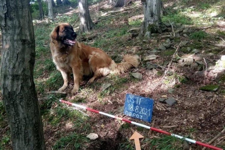 Köpek gezdirirken hazine buldu