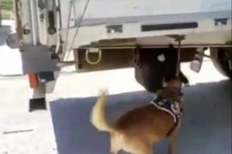 Bursa'da narkotik köpeği buldu TIR dorsesinde yakalandı