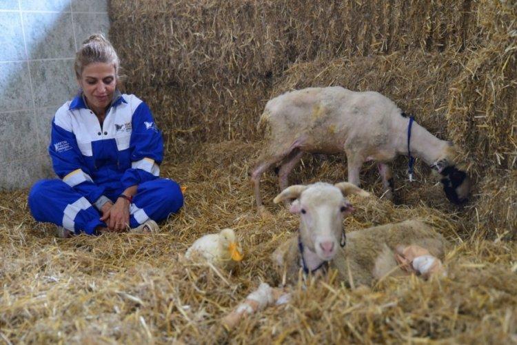 Yangından kurtarılan hayvanların Bursa'daki çiftlikte uyumlu yaşamı