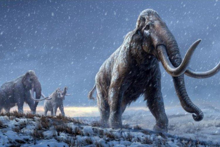10 bin yıl önce yok olan mamutlar yeniden doğacak