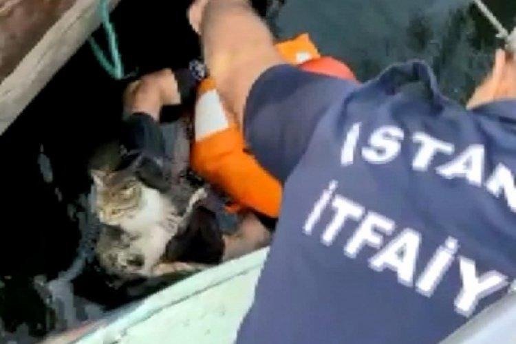 İstanbul Avcılar'da denize düşen kedi ekiplerce kurtarıldı