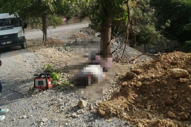 Adana'da meyve toplamak için çıktığı ağaçtan düşüp öldü