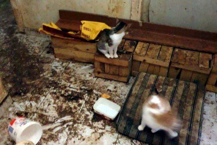 Komşuların koku şikayetinde bulunduğu evden 50 kedi çıktı!