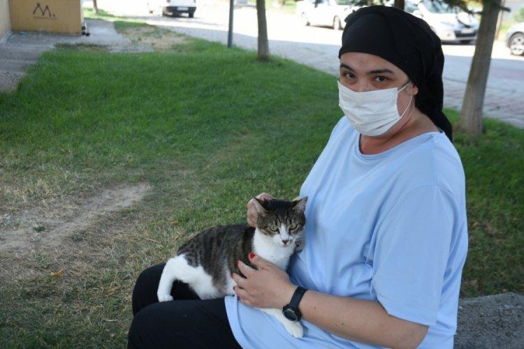 Edirne'de 'kayıp kedi' iddiası, tarafları mahkemelik etti!