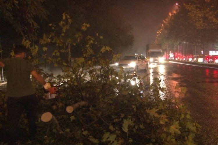 İstanbul'da sağanak yağış sebebiyle ağaçlar devrildi