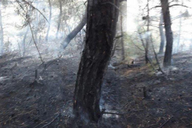 Tekirdağ'da korkutan orman yangını