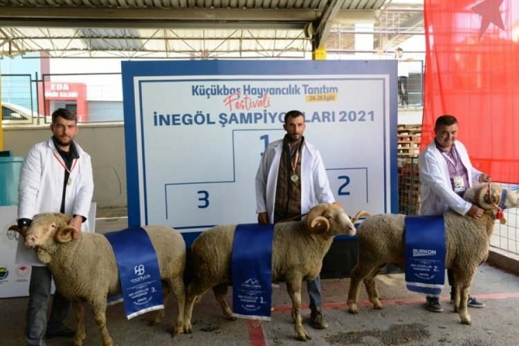 Bursa'da hayvanların 'güzellik yarışması' renkli anlara sahne oldu