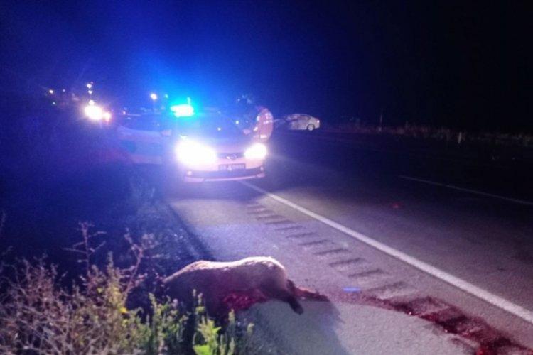 Yola çıkan domuz sürüsü kazaya sebep oldu