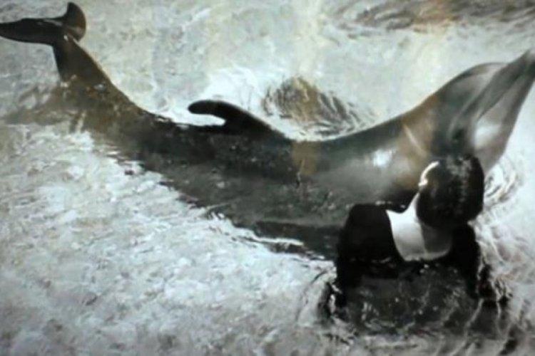 Araştırmacı kadın yunus balığıyla cinsel ilişkiye girmiş!