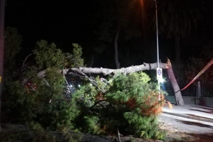 İzmir'de çam ağacı devrildi, tramvay seferleri durdu
