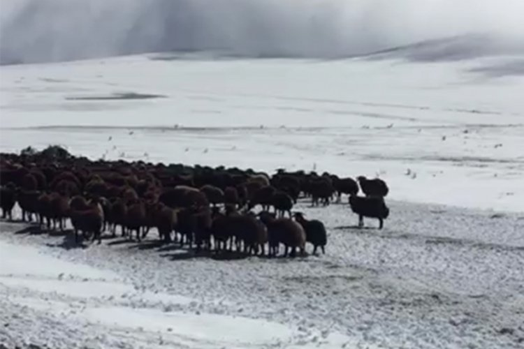 Kar nedeniyle mahsur kalan çobanlar ve sürüleri kurtarıldı
