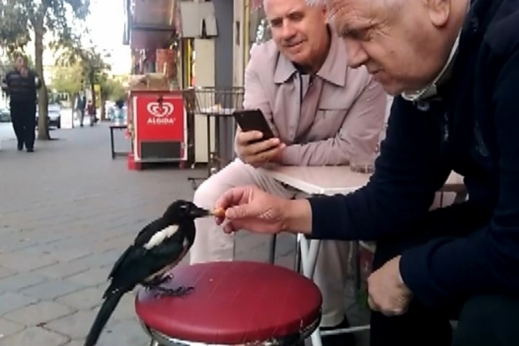 Bursa'da bu saksağan kendine döner ısmarlatıyor