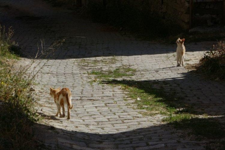 """Bursa'da """"Yırtıcı hayvanlar parçalasın"""" diye bırakılan kedilere köylüler sahip çıktı"""