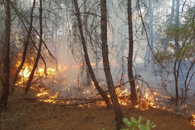 Kütahya'da korkutan orman yangını