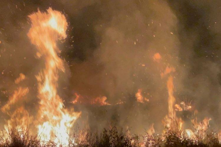 Bursa İznik Gölü kıyısında yangın