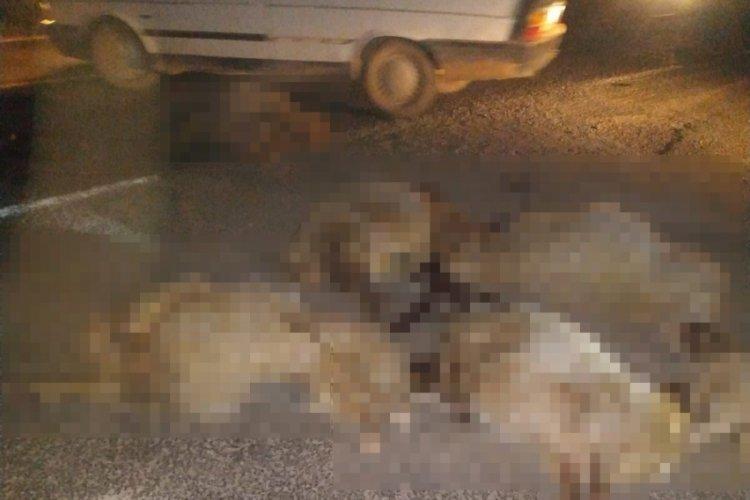 Şanlıurfa'da arabanın çarptığı 10 koyun telef oldu