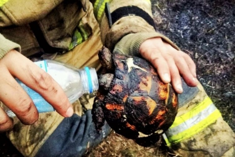 Bursa'da yangının ortasında kalan kaplumbağayı itfaiye ekipleri kurtardı