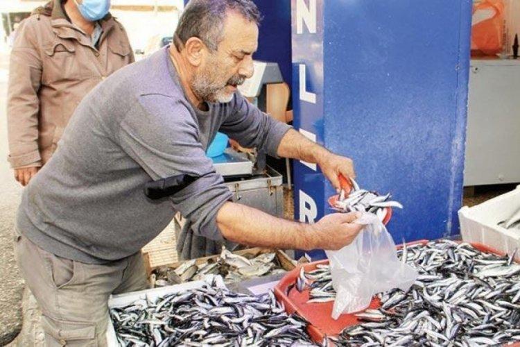 Karadeniz'de hamsi bolluğu: Fiyatı 15 TL'ye düştü