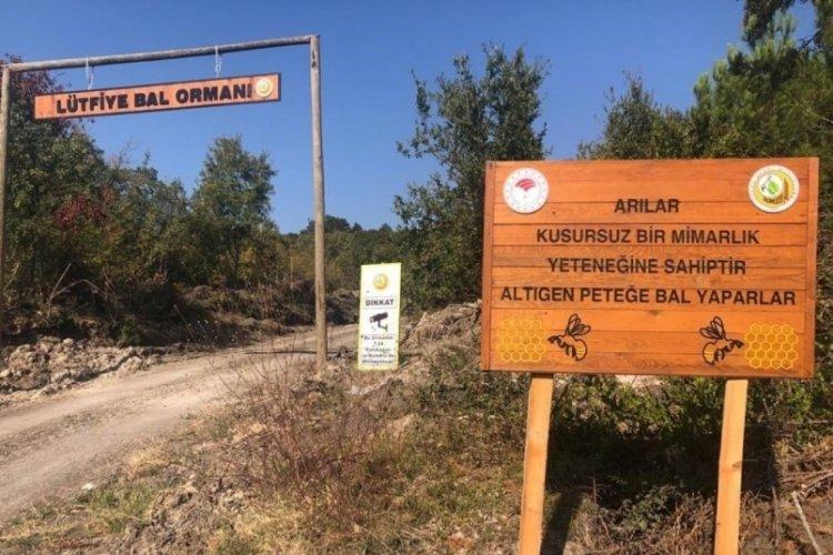 Bursa Mustafakemalpaşa'da bal ormanları yaygınlaşıyor