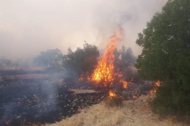 Gaziantep'te korkutan orman yangını