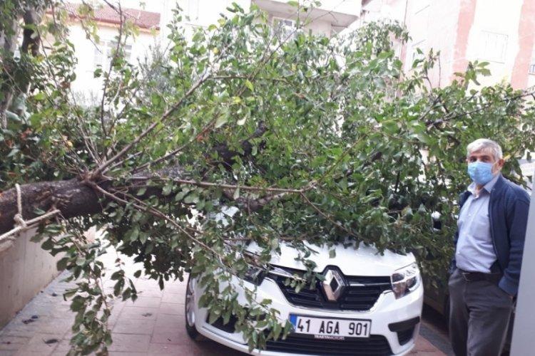 Kocaeli'de park halindeki otomobilin üzerine ağaç düştü