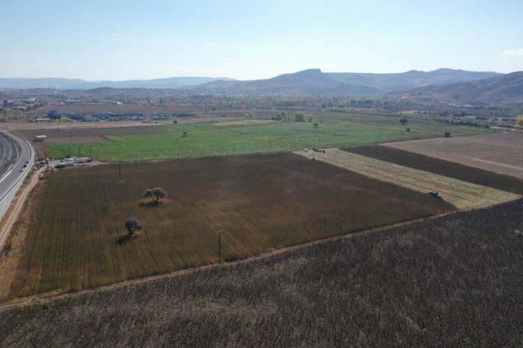 Sivas'ta izinli ilk kenevir hasadı başladı