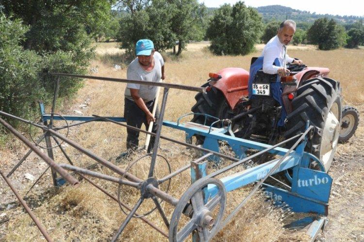 Bursa'da siyez buğdayında hasat bereketi