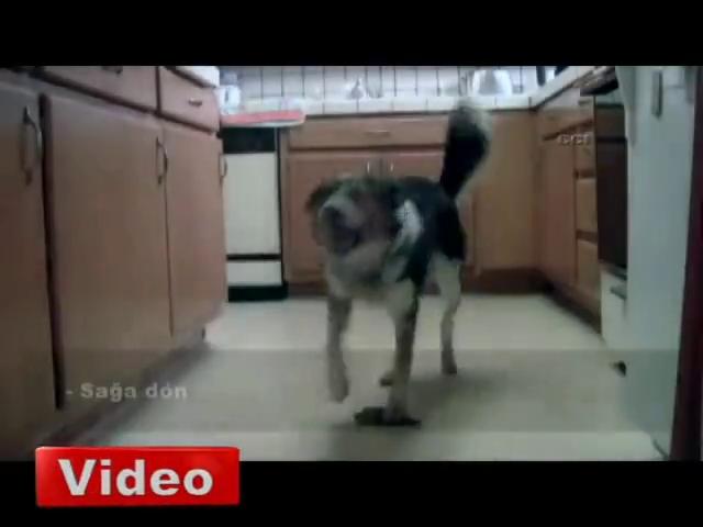 Bu köpek görenleri şaşırtıyor!