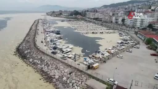 Bursa'da kıyıya su samurunun cansız bedeni vurdu