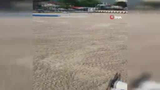 Bursa'da deniz salyaları ördeklere de zor anlar yaşattı