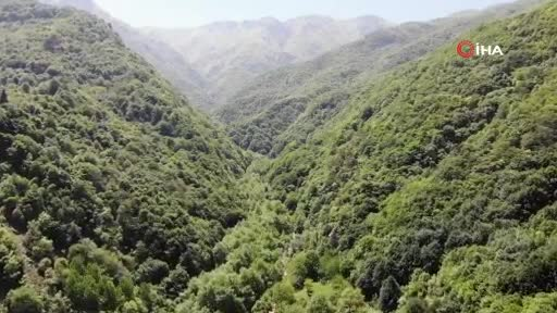 Bursa'da doğa yürüyüşçüsü her gün dostu sincabı elleriyle beslemek için dağa çıkıyor