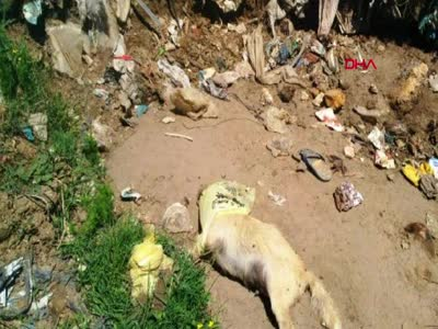 Çöpte 17 köpek ölüsü bulundu