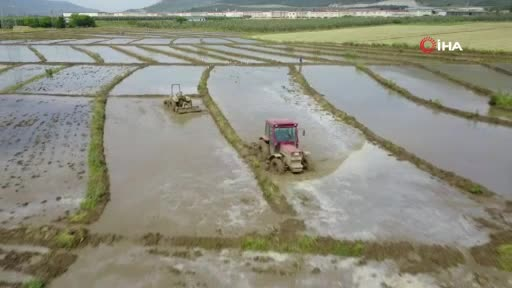 Bursa'da çeltik üretiminin çileli yolculuğu başladı