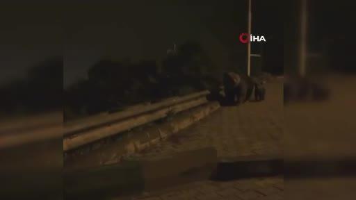 Bursa'da aranan ayı ailesi bulundu