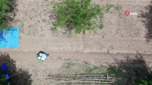 Bursa'da çiftçinin yüzünü güldürdü: Kilosu 10-15 lira