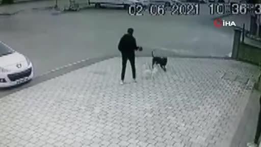 Bursa'da pitbull saldırısı! O anlar kamerada