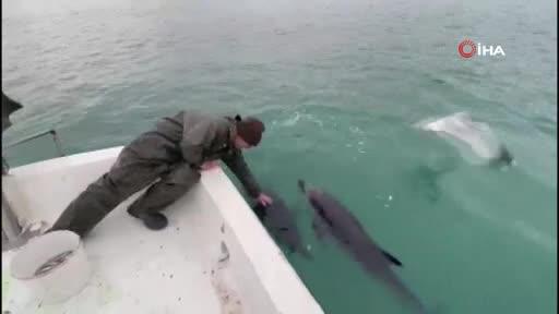 Balıkçılar ile yunusların dostluğu